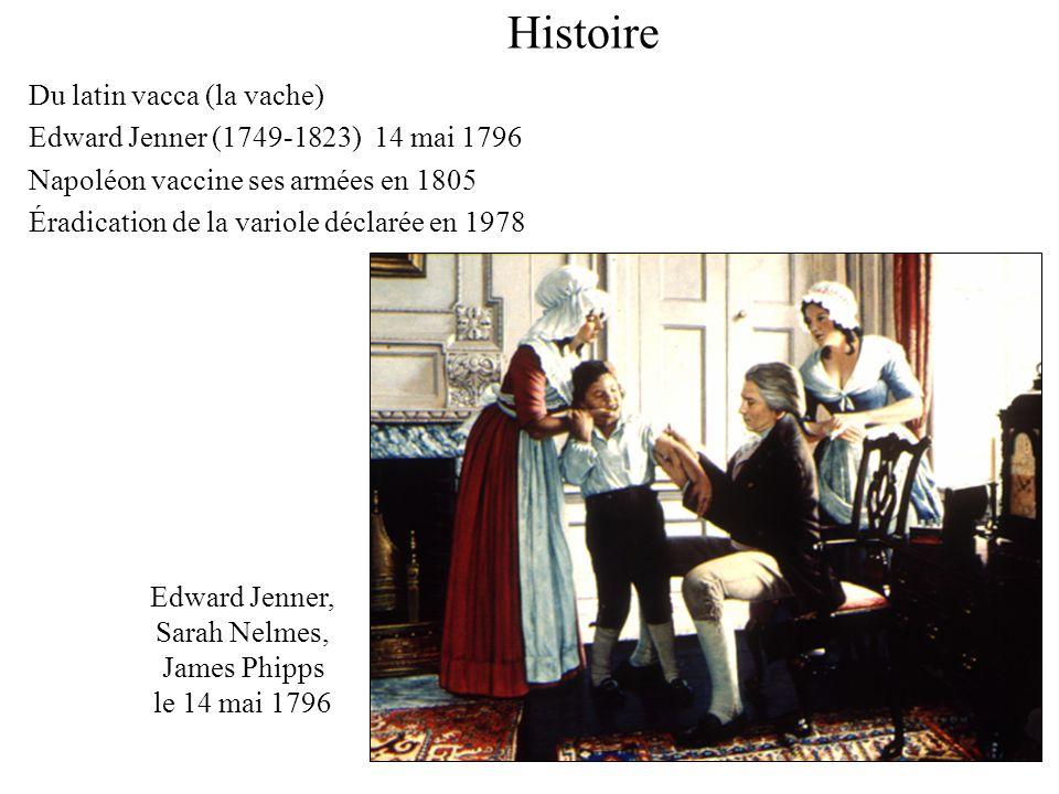 Histoire Du latin vacca (la vache)