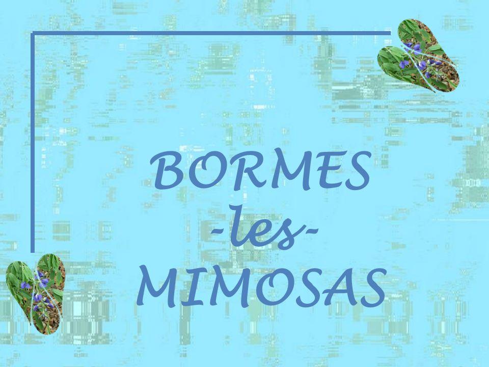 BORMES -les- MIMOSAS