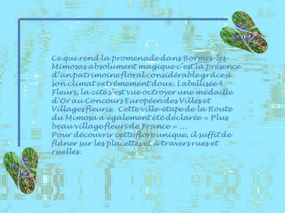 Ce qui rend la promenade dans Bormes-les-Mimosas absolument magique c'est la présence d'un patrimoine floral considérable grâce à son climat extrêmement doux. Labellisée 4 Fleurs, la cité s'est vue octroyer une médaille d Or au Concours Européen des Villes et Villages fleuris. Cette ville-étape de la Route du Mimosa a également été déclarée « Plus beau village fleuri de France » ...