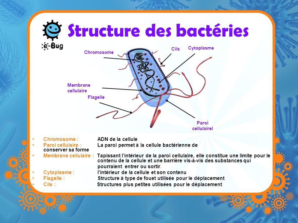 Structure des bactéries