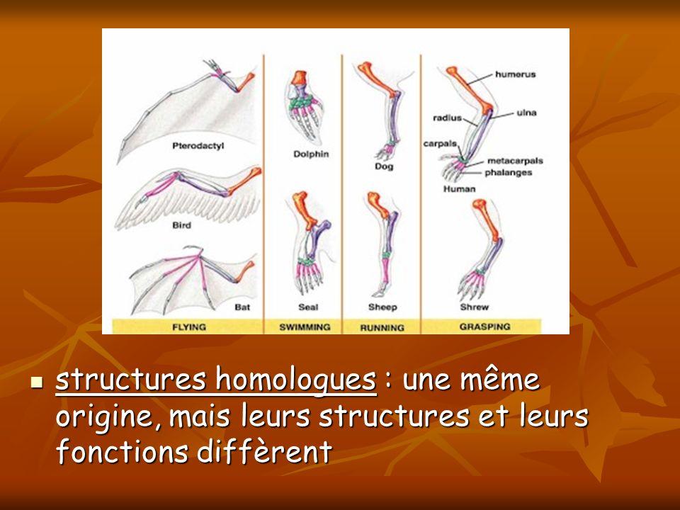 structures homologues : une même origine, mais leurs structures et leurs fonctions diffèrent
