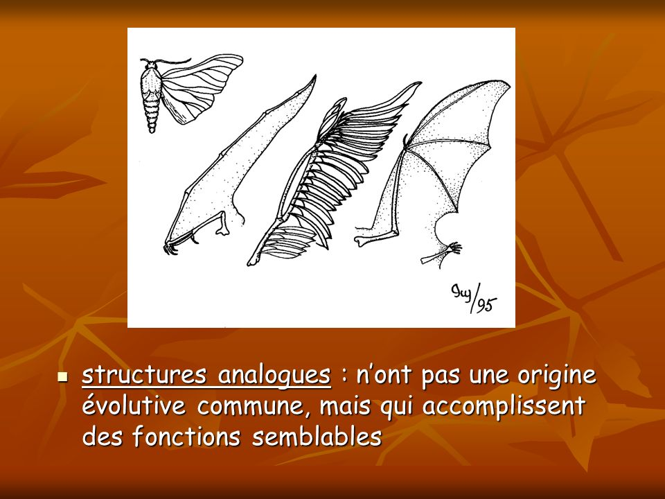 structures analogues : n'ont pas une origine évolutive commune, mais qui accomplissent des fonctions semblables