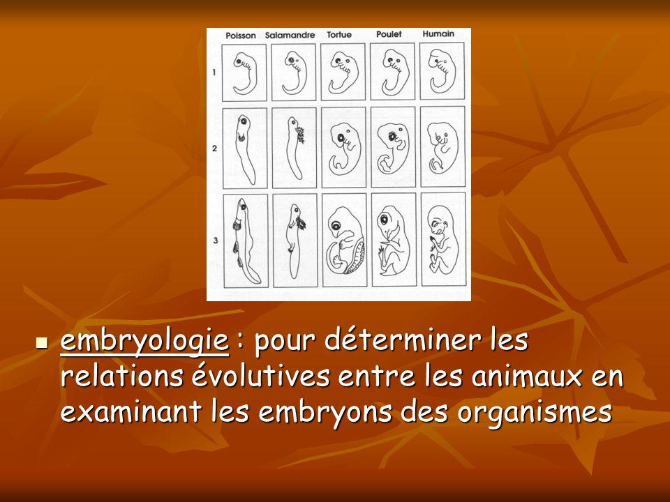 embryologie : pour déterminer les relations évolutives entre les animaux en examinant les embryons des organismes