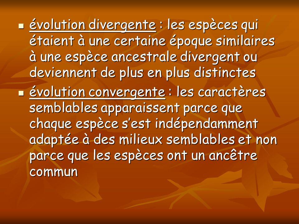 évolution divergente : les espèces qui étaient à une certaine époque similaires à une espèce ancestrale divergent ou deviennent de plus en plus distinctes