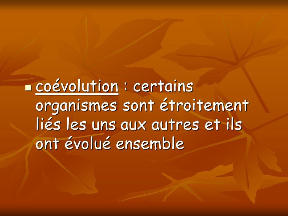 coévolution : certains organismes sont étroitement liés les uns aux autres et ils ont évolué ensemble