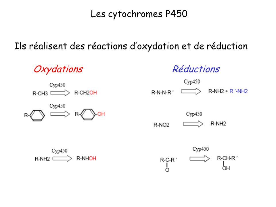 Les cytochromes P450 Ils réalisent des réactions d'oxydation et de réduction Oxydations Réductions