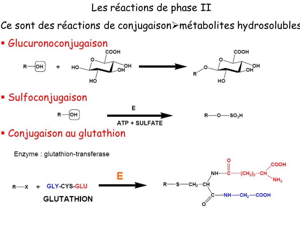 Les réactions de phase II
