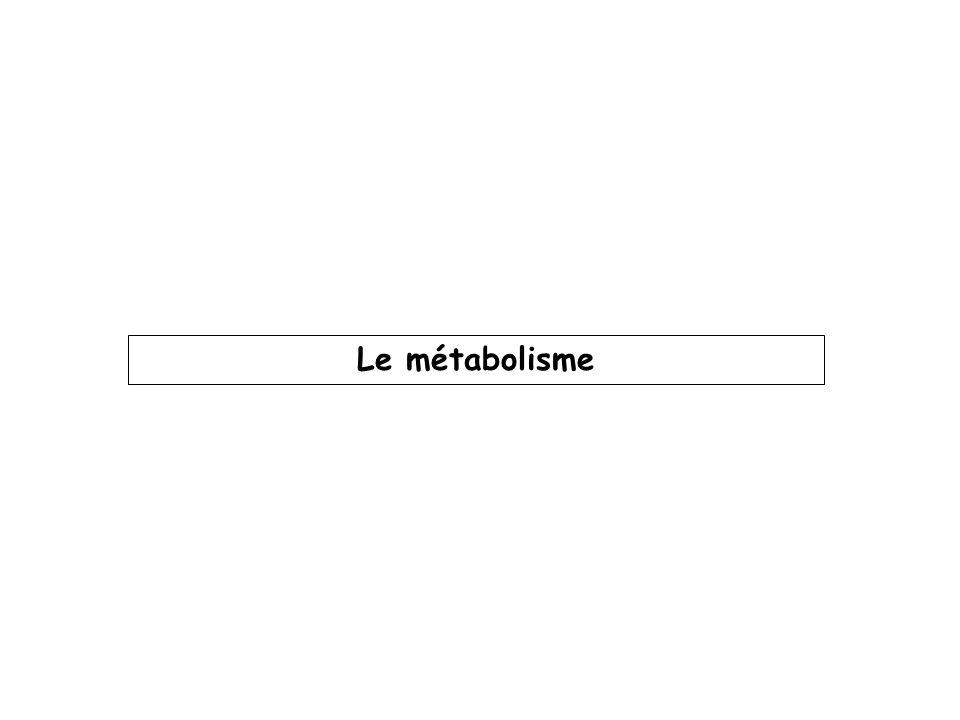 Le métabolisme