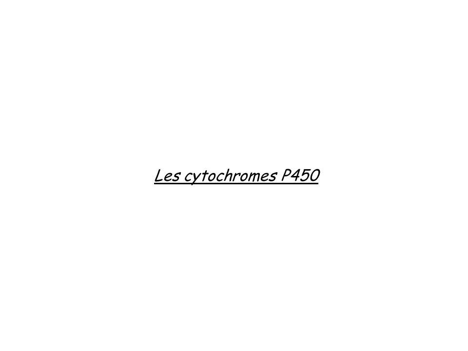 Les cytochromes P450