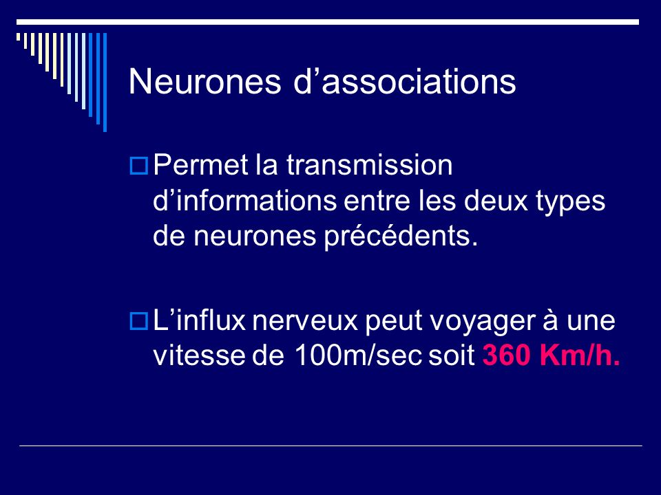 Neurones d'associations