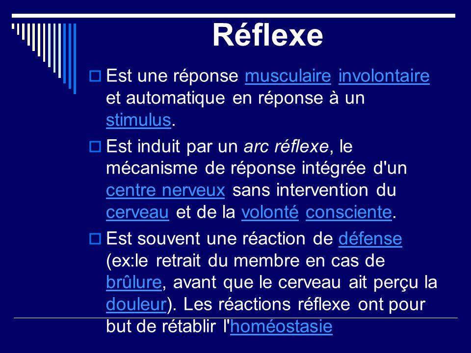 Réflexe Est une réponse musculaire involontaire et automatique en réponse à un stimulus.