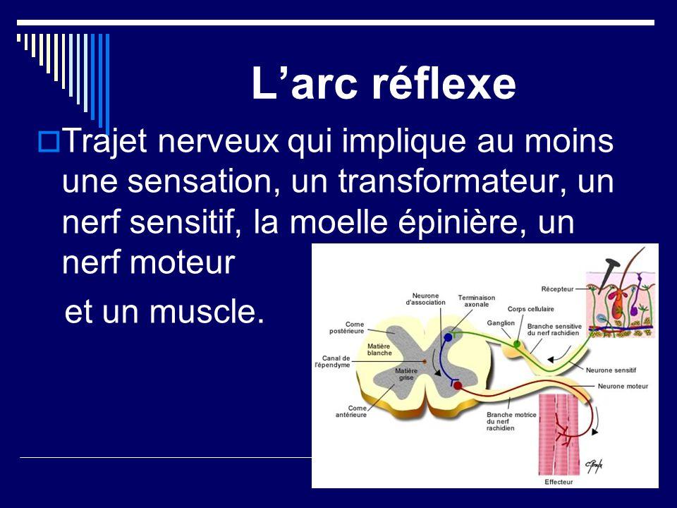 L'arc réflexe Trajet nerveux qui implique au moins une sensation, un transformateur, un nerf sensitif, la moelle épinière, un nerf moteur.