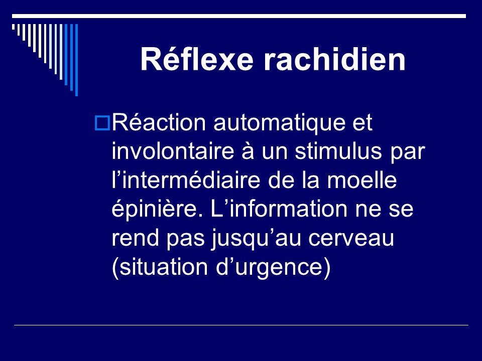 Réflexe rachidien