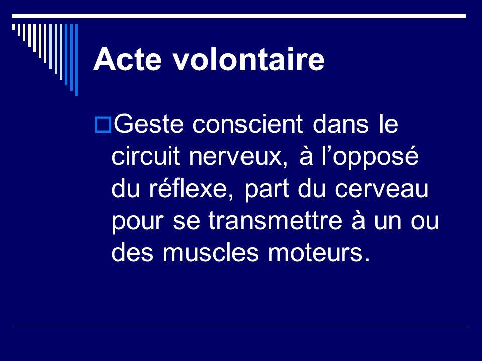 Acte volontaire Geste conscient dans le circuit nerveux, à l'opposé du réflexe, part du cerveau pour se transmettre à un ou des muscles moteurs.