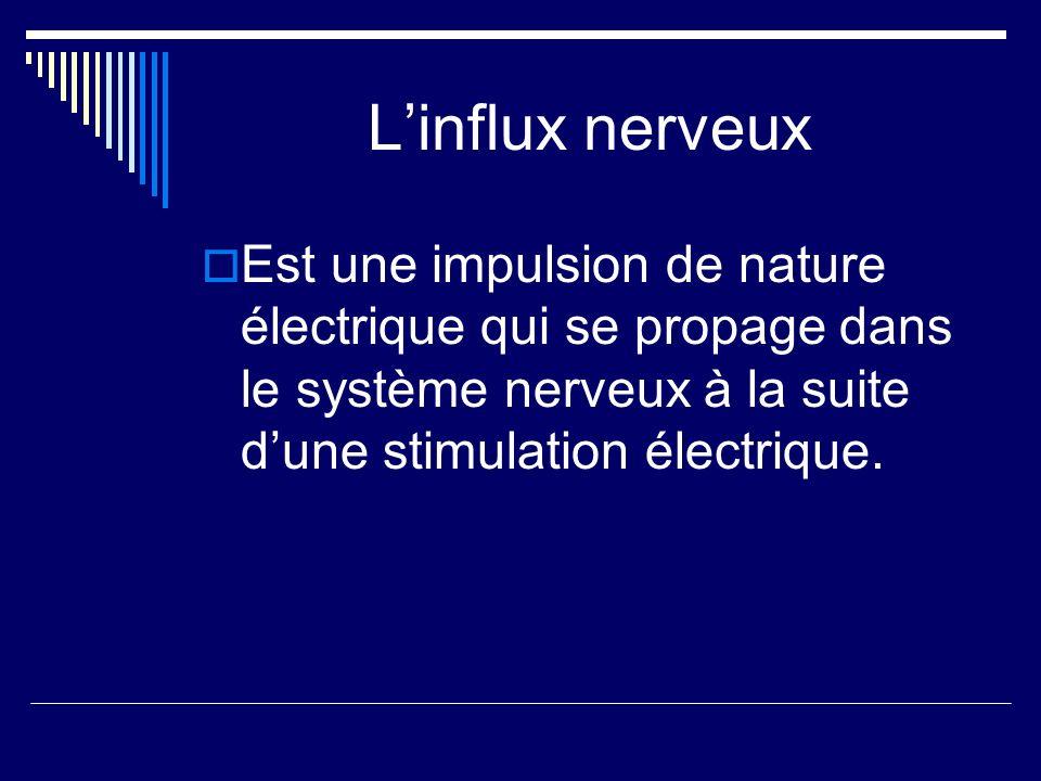 L'influx nerveux Est une impulsion de nature électrique qui se propage dans le système nerveux à la suite d'une stimulation électrique.