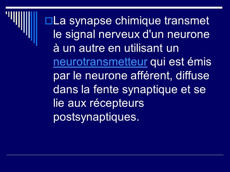 La synapse chimique transmet le signal nerveux d un neurone à un autre en utilisant un neurotransmetteur qui est émis par le neurone afférent, diffuse dans la fente synaptique et se lie aux récepteurs postsynaptiques.