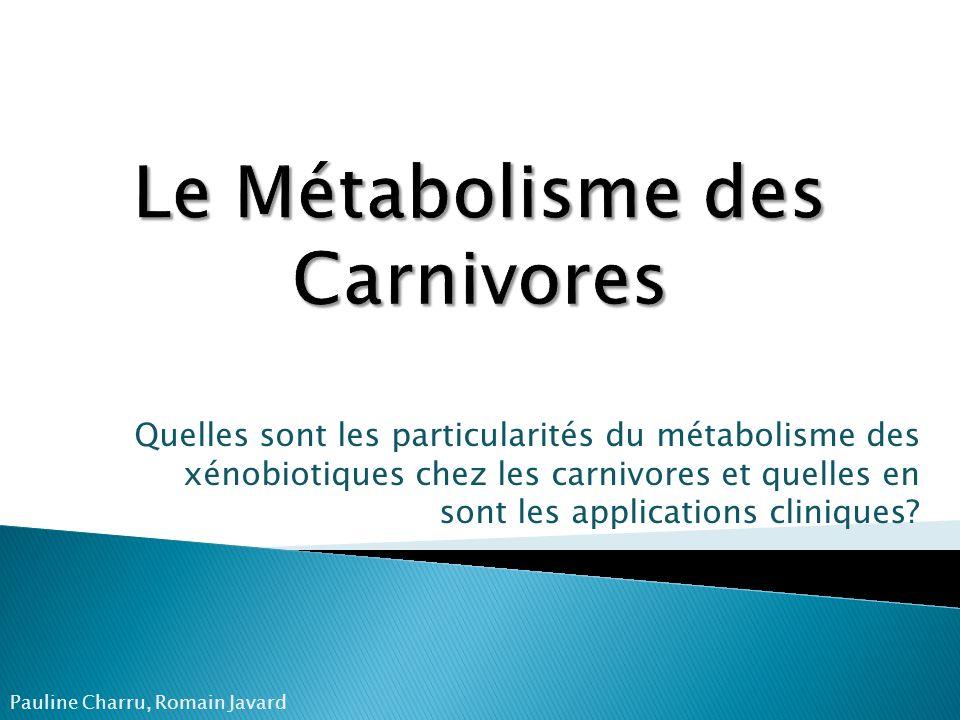 Le Métabolisme des Carnivores