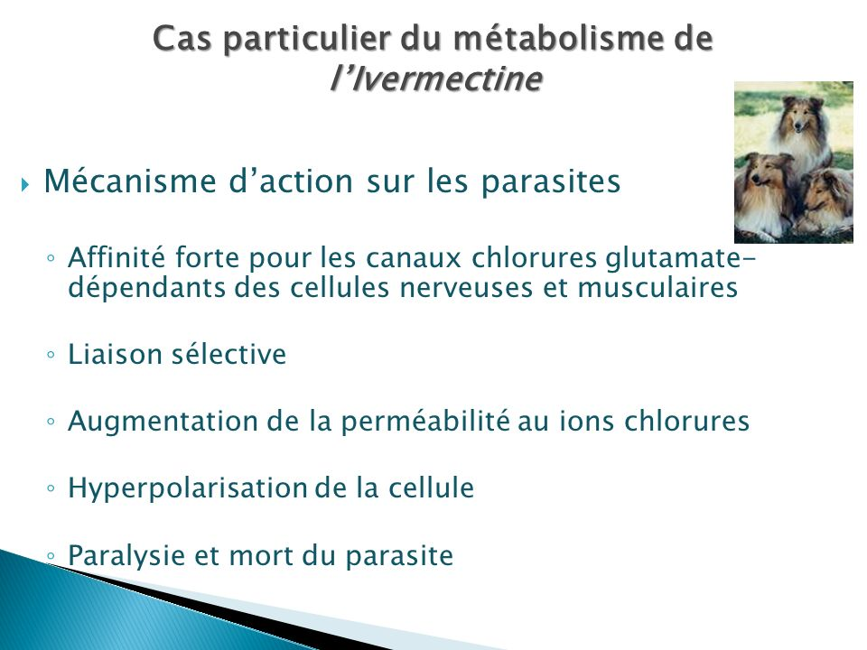 Cas particulier du métabolisme de l'Ivermectine