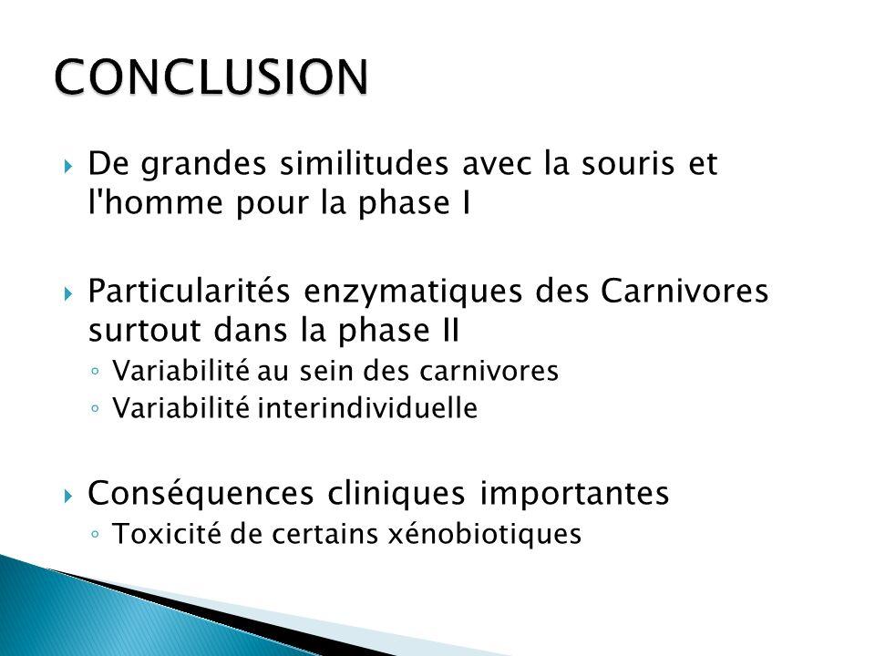 CONCLUSION De grandes similitudes avec la souris et l homme pour la phase I. Particularités enzymatiques des Carnivores surtout dans la phase II.