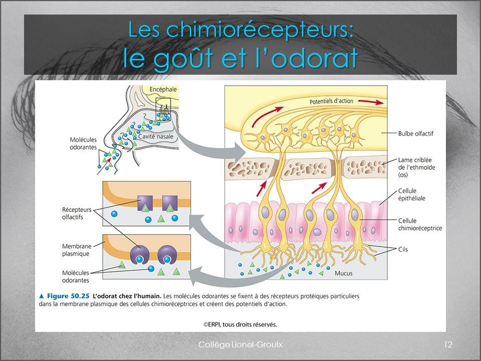 Les chimiorécepteurs: le goût et l'odorat