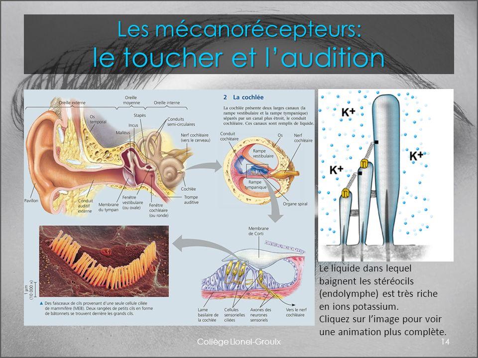 Les mécanorécepteurs: le toucher et l'audition