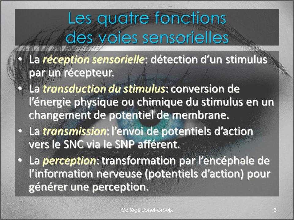 Les quatre fonctions des voies sensorielles