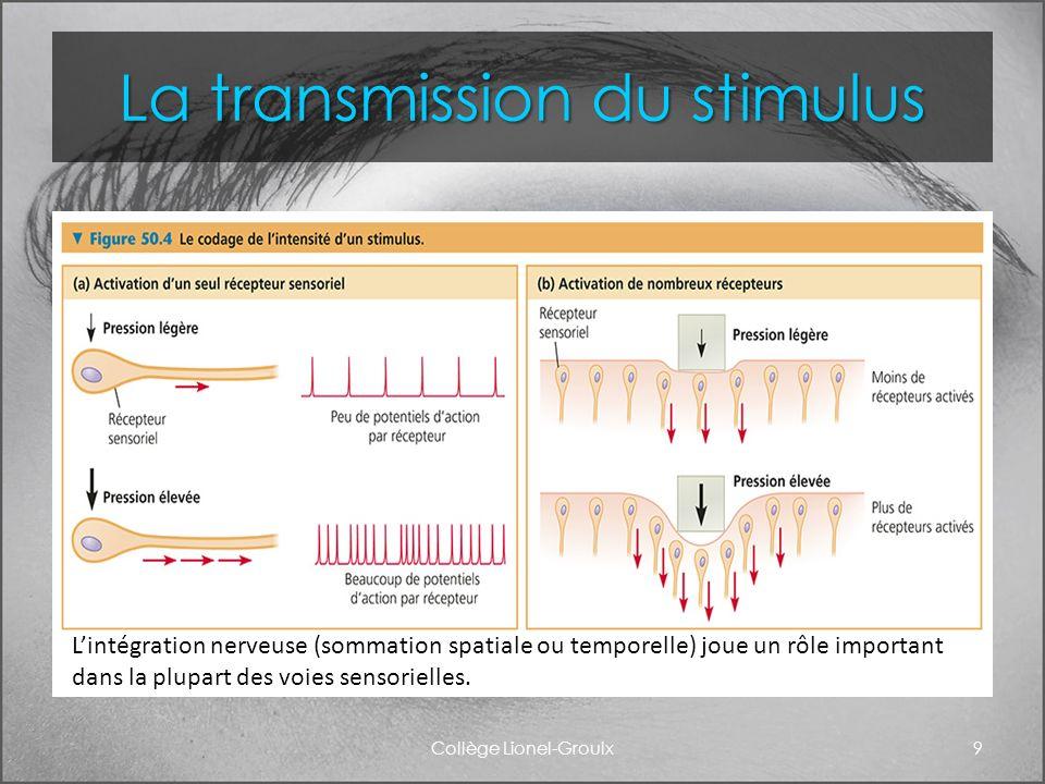 La transmission du stimulus