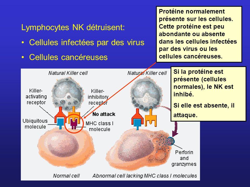 Lymphocytes NK détruisent: Cellules infectées par des virus
