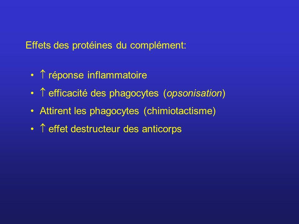 Effets des protéines du complément: