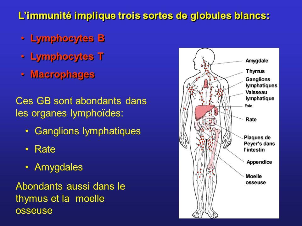 L'immunité implique trois sortes de globules blancs: