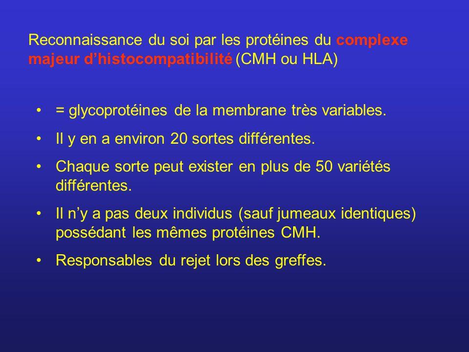 Reconnaissance du soi par les protéines du complexe majeur d'histocompatibilité (CMH ou HLA)