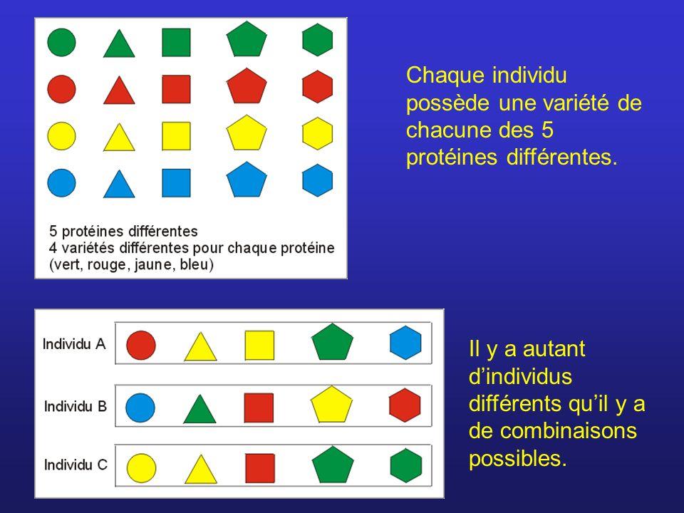 Chaque individu possède une variété de chacune des 5 protéines différentes.