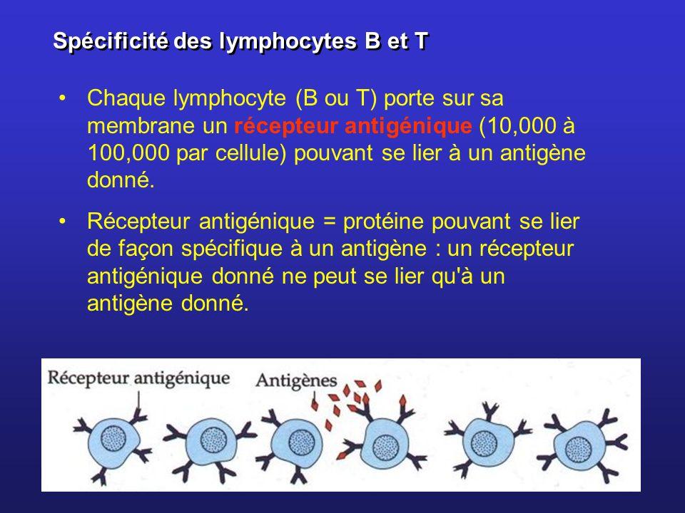 Spécificité des lymphocytes B et T