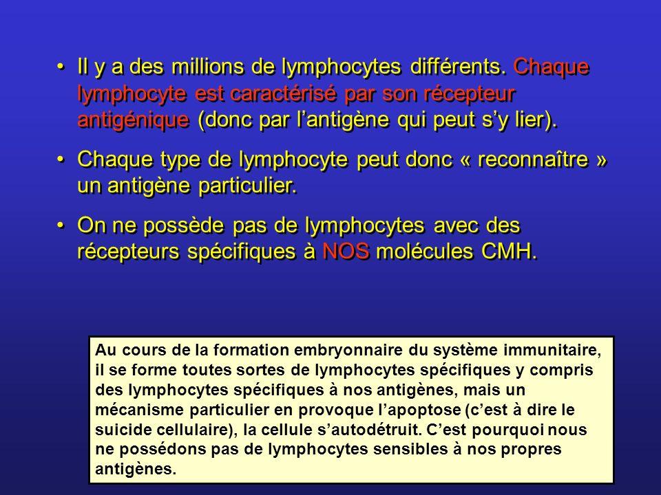 Il y a des millions de lymphocytes différents