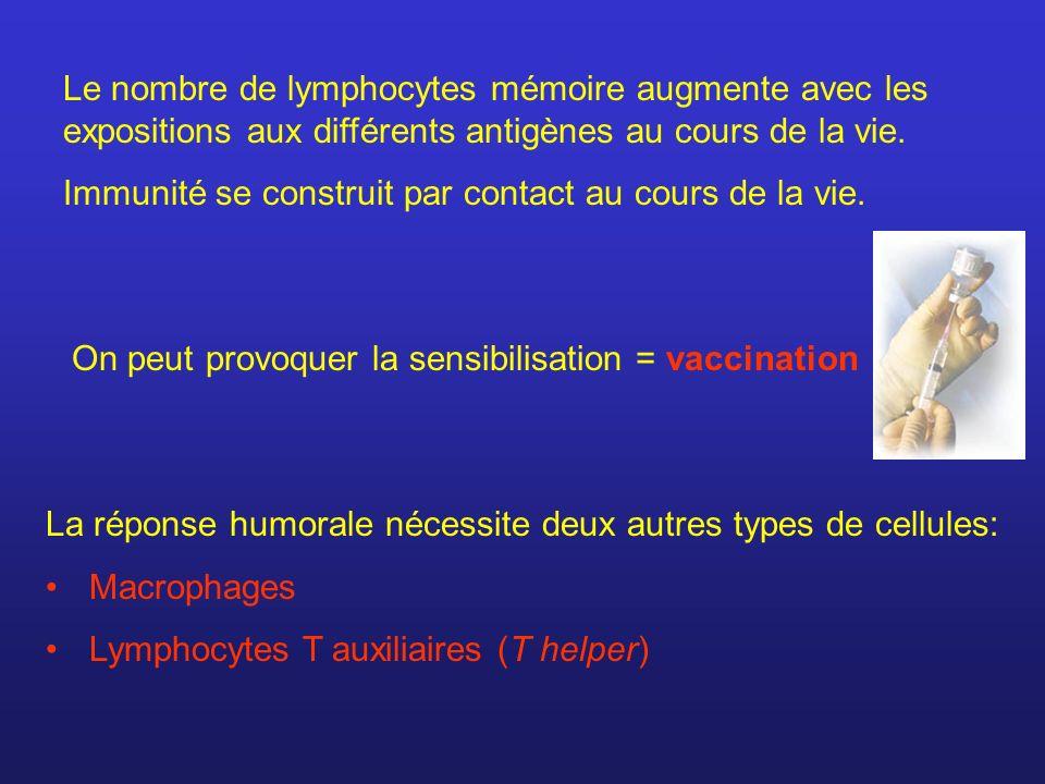 Le nombre de lymphocytes mémoire augmente avec les expositions aux différents antigènes au cours de la vie.