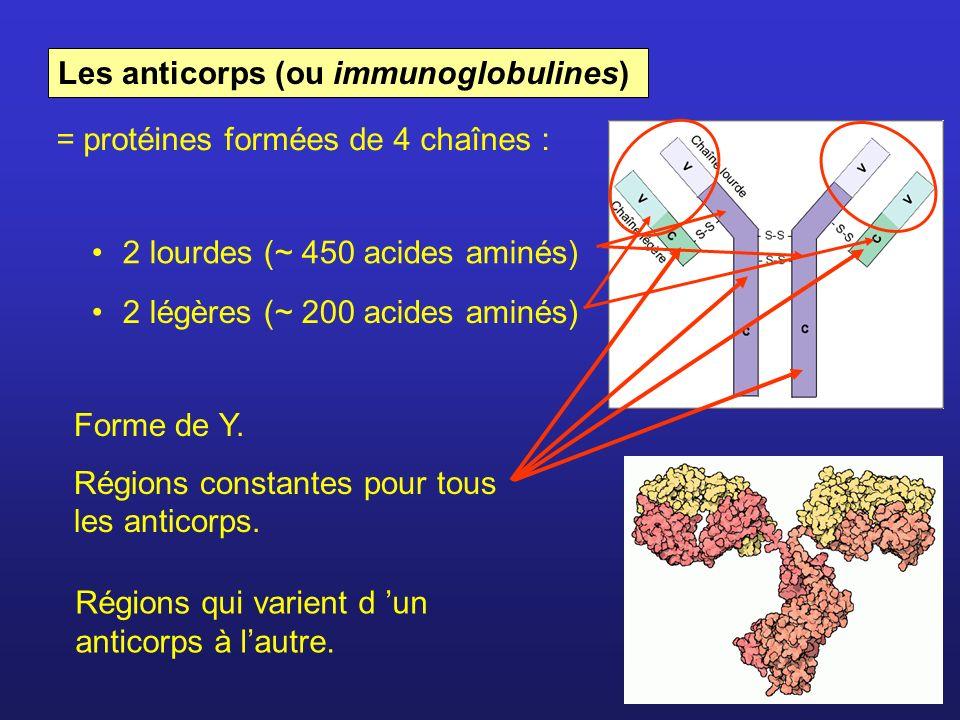 Les anticorps (ou immunoglobulines)