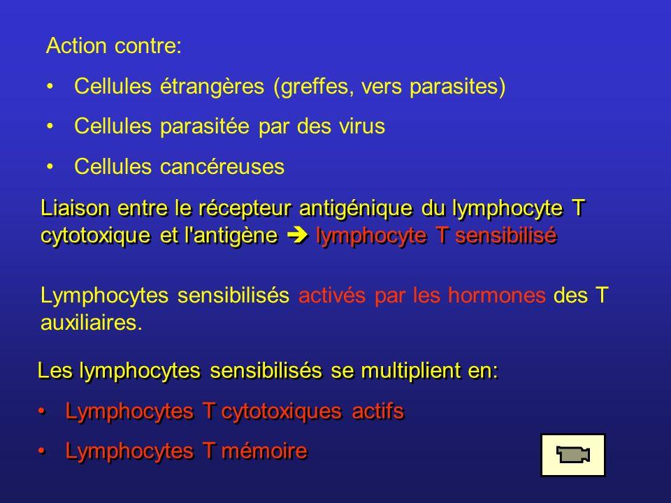 Action contre: Cellules étrangères (greffes, vers parasites) Cellules parasitée par des virus. Cellules cancéreuses.