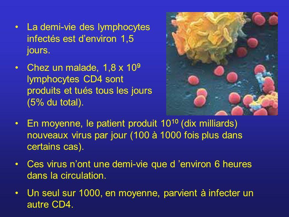 La demi-vie des lymphocytes infectés est d'environ 1,5 jours.