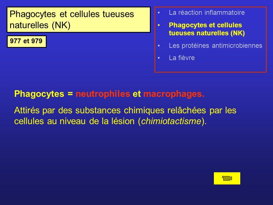 Phagocytes et cellules tueuses naturelles (NK)