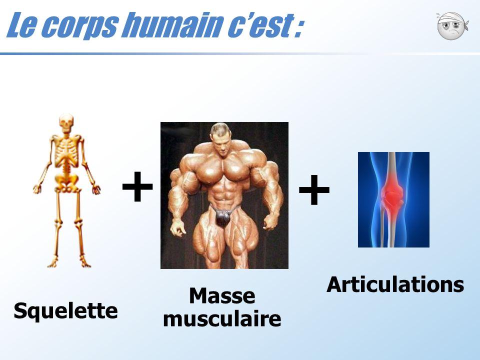 Le corps humain c'est : + + Articulations Masse musculaire Squelette