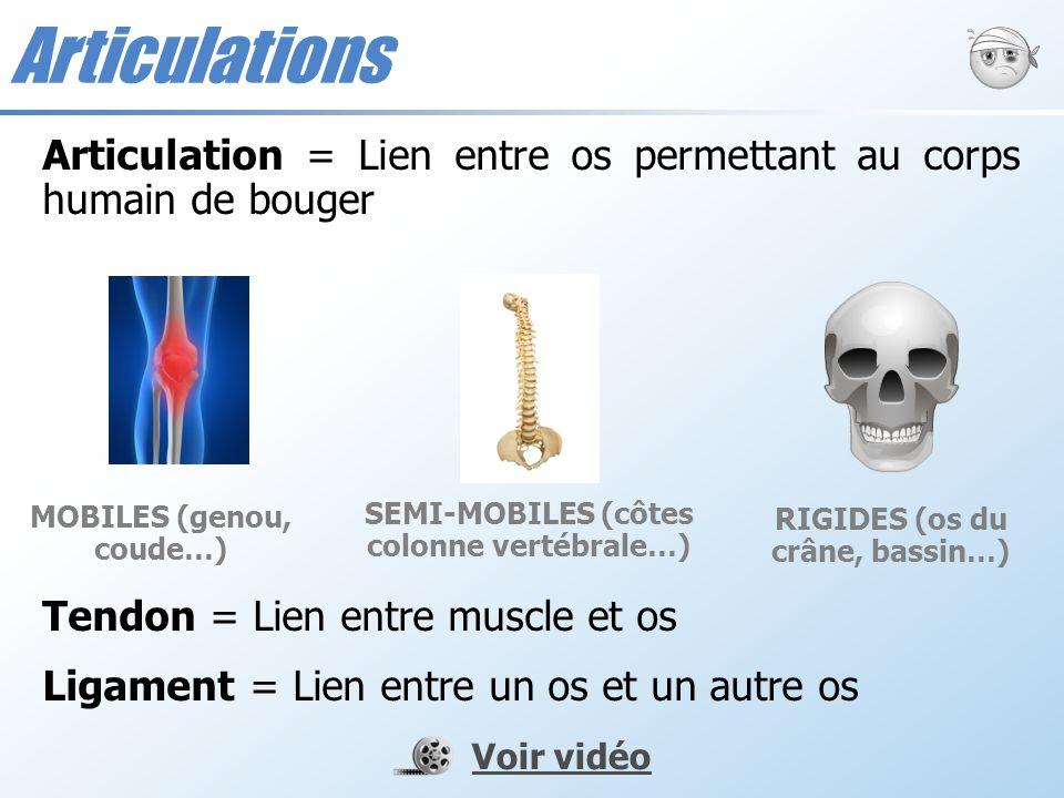 Articulations Articulation = Lien entre os permettant au corps humain de bouger. Tendon = Lien entre muscle et os.