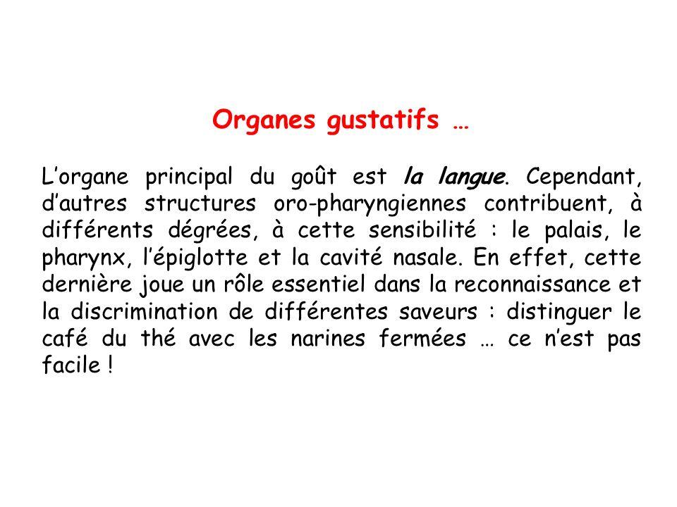 Organes gustatifs …