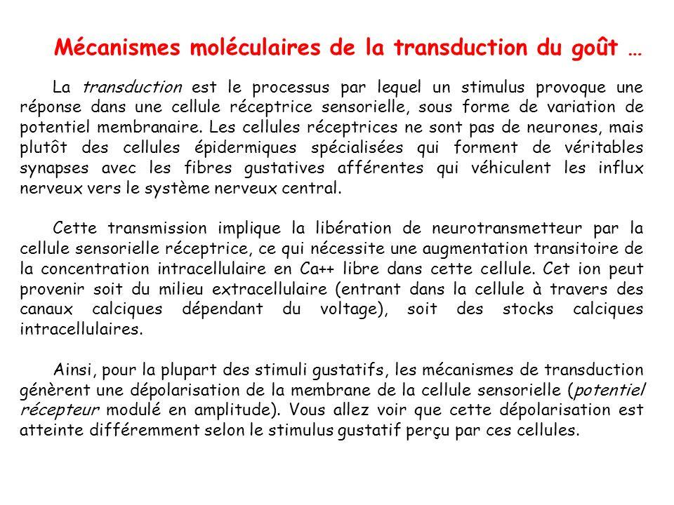 Mécanismes moléculaires de la transduction du goût …