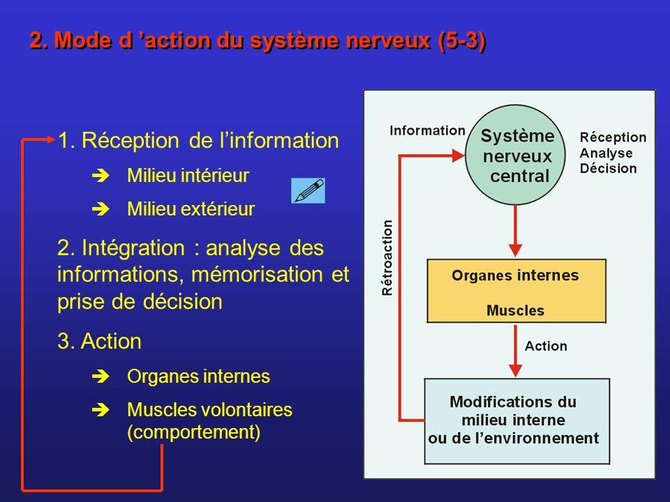 2. Mode d 'action du système nerveux (5-3)