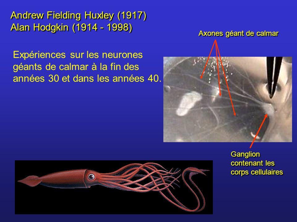 Andrew Fielding Huxley (1917) Alan Hodgkin (1914 - 1998)