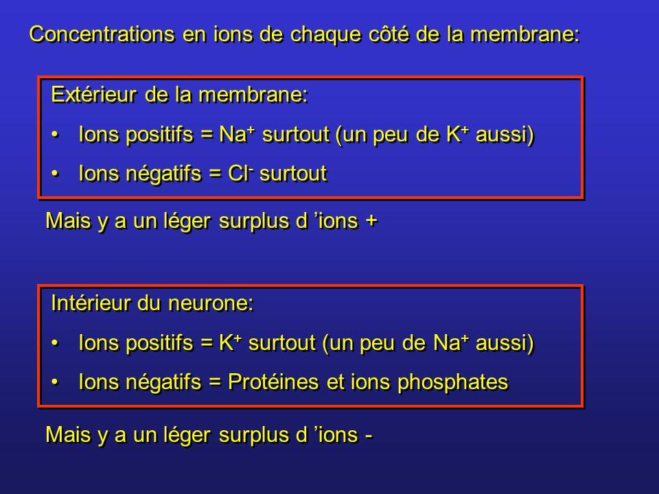 Concentrations en ions de chaque côté de la membrane: