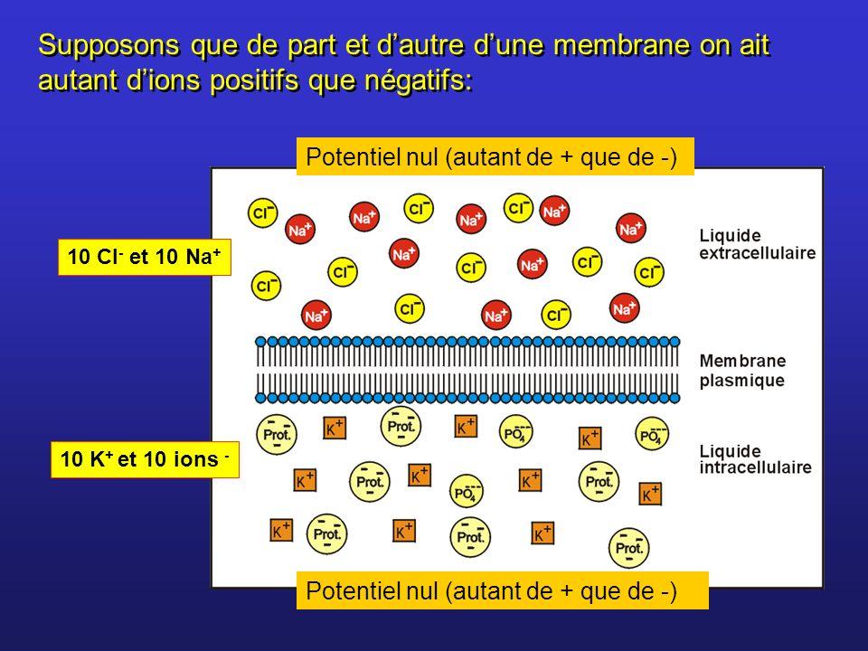 Supposons que de part et d'autre d'une membrane on ait autant d'ions positifs que négatifs: