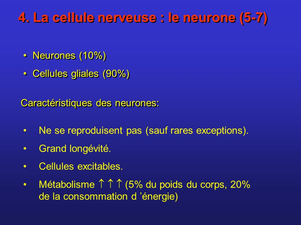 4. La cellule nerveuse : le neurone (5-7)