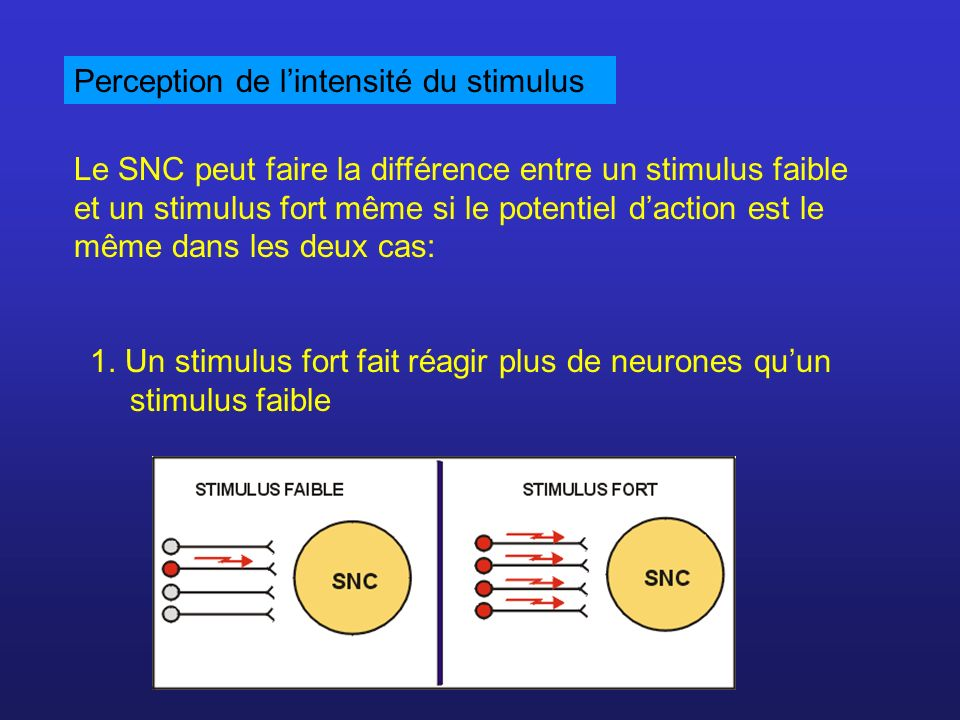 Perception de l'intensité du stimulus