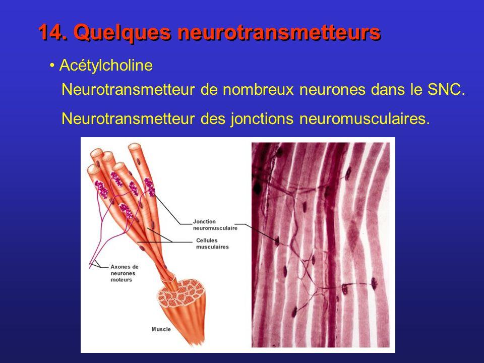 14. Quelques neurotransmetteurs